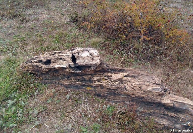 Каменные деревья - Алексеево-Дружковка
